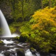 Ponytail falls, autumn, Columbia Gorge, Oregon — Stock Photo