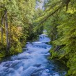 Fast-moving Mountain River in Oregon — Stock Photo