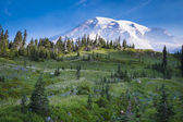 Beautiful wildflowers and Mount Rainier — Stock Photo