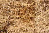 Dry straw texture — Stock Photo