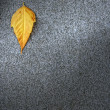 Leaf on asphalt — Stock Photo