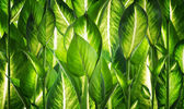 Background of natural green leaves — Stock Photo