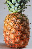 The PINEAPPLE. — Stock Photo