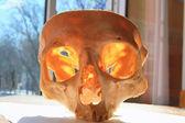 The skull. — Stock Photo
