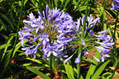 Blue flowers. — Zdjęcie stockowe