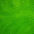 Leaf pattern — Stock Photo