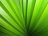 Green leaf — Stockfoto