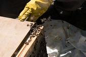 Beekeeper with beehive — Stock Photo