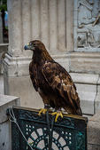 Golden eagle with monumnet background. — Stock Photo