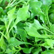 Watercress (Nasturtium officinale) — Stock Photo #27965285