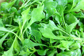 Watercress (Nasturtium officinale) — Stock Photo