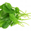 Closeup photo of Fresh organic Garden Rocket Salad — Stock Photo