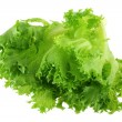 Fresh organic hydroponic Frille Iceberg Lettuce — Stock Photo