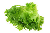 Fresh organic hydroponic Frille Iceberg Lettuce — Stock Photo