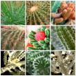 Different kinds of Cactus — Stock Photo
