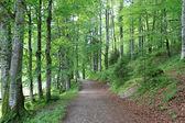 A trekking pathway in Austria — Stock Photo