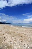 Sand on the sandy beach, full of shells — Stock Photo