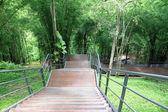 Uma trilha fácil e caminhada na floresta, tailândia - ásia — Foto Stock