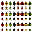A set of Vector Insect Icons : ladybird ,  ladybug ,  beetle  — Stock Vector