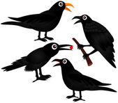 Black Birds - Crows — Stock Vector