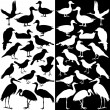 Birds silhouettes (Black and White)  — Stock Vector
