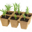 Stock Photo: Biodegradable Plant Pots with Rosemary