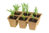 Biodegradable Plant Pots with Rosemary — Stock Photo