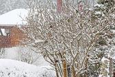 Pássaros na árvore coberta de neve — Foto Stock