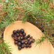 Fresh twigs of Juniper and the Berries — Stock Photo