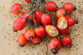 Rose hip flowers cut in half — Stock Photo