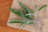 Closeup photo of Sage leaves — Stock Photo