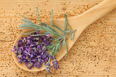Freshly picked Lavender Flowers — Stock Photo