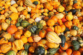 Fresh gourds, squashes, and Pumpkins — Stock Photo