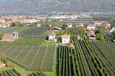 Apple Orchard in Trentino-Alto Adige, Italy — Stock Photo