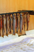 Hanging Trouts with gills and entrails removed. — Stock Photo