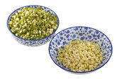 Bowls of Mung Bean (Green gram) Sprouts — Stock Photo