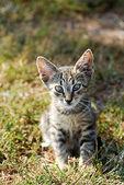 Little cat — Stock Photo