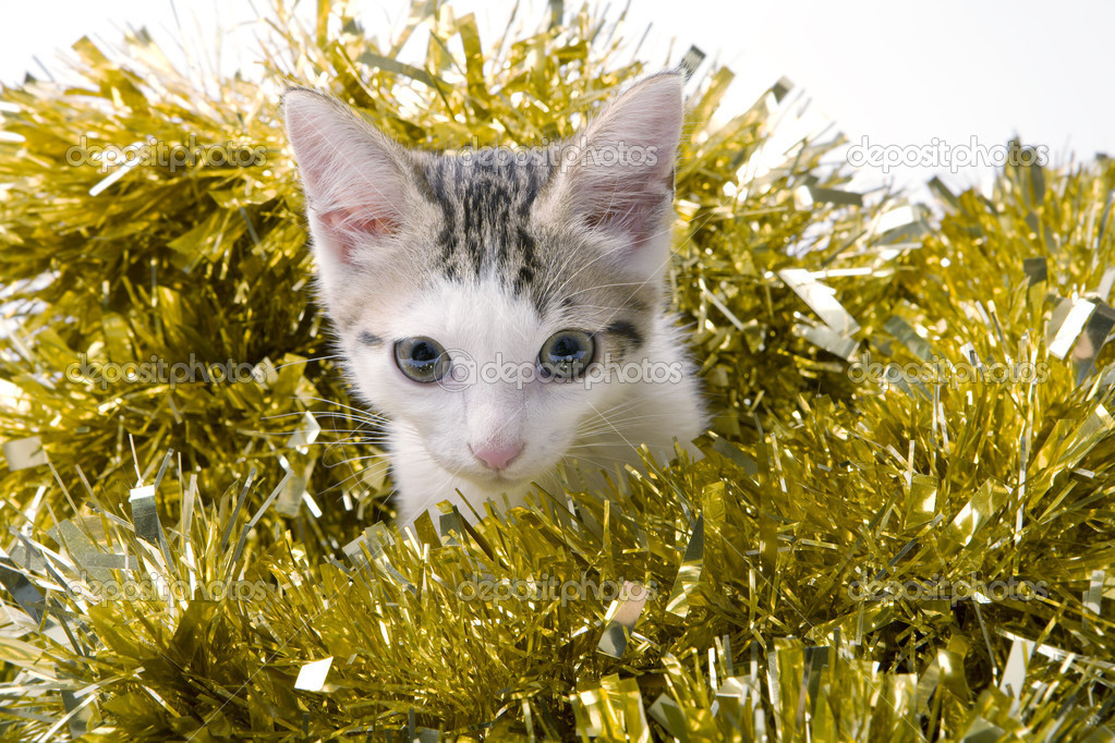 A photo of cute kitten — Stock Photo #13928903