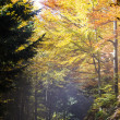 Stock Photo: Autumn Bavaria