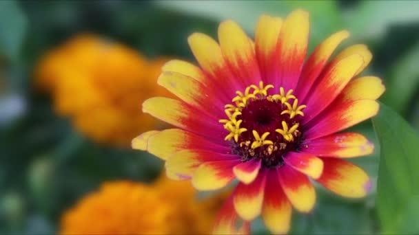 Flores — Vídeo de stock