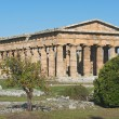 Stock Photo: Valley of Temples of Paestum