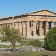 Royalty-Free Stock Photo: Valley of the Temples of Paestum