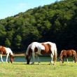 Stock Photo: Grazing by the Water 03
