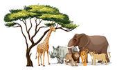 Afrika hayvanlar — Stok Vektör