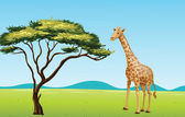 Giraffe by a tree — Stock Vector
