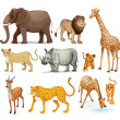 Animals — Vector de stock #13485014