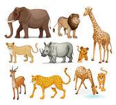 Hayvanlar — Stok Vektör