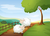 Sheeps — Stock Vector