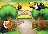 动物园和鸟 — 图库矢量图片