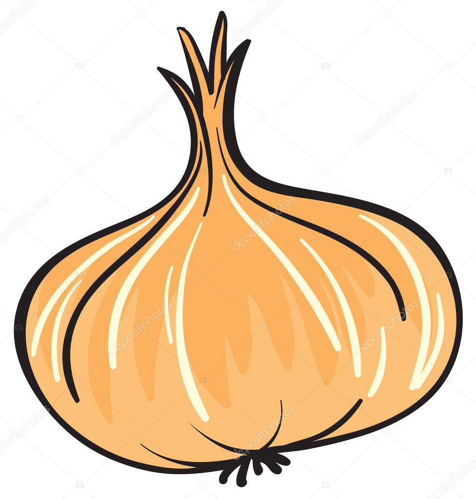 Illustration of onion on a white background  Stock Vector #14173241